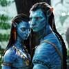 Dalette nickli üyeye ait kullanıcı resmi (Avatar)